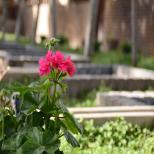 نوروز مبارک - عکس از سورنا رفیعیان